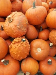 mini orange pumpkins