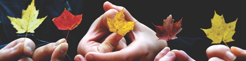 five hands holding yellow and orange fall leaves