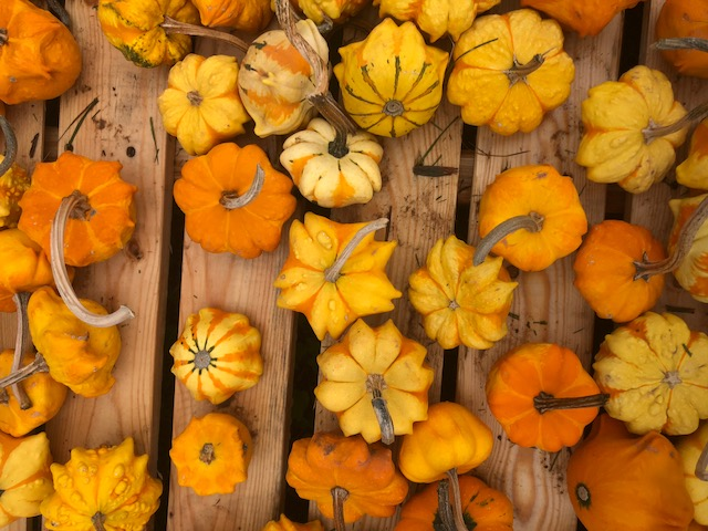 Pallet covered in small orange gourds