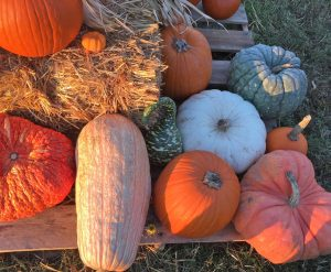 Straw bale and variety of different color pumpkins