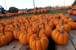 Several pumpkins on a pallet